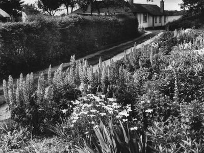 https://imgc.allpostersimages.com/img/posters/cottage-garden-border_u-L-Q107JMX0.jpg?p=0