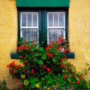 Cottage Window, Co Antrim, Ireland (photo)