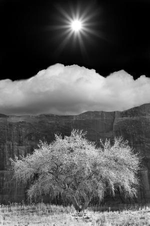 https://imgc.allpostersimages.com/img/posters/cottonwood-sunbeams-canyon-de-chelly-arizona-10_u-L-Q1AHP0J0.jpg?p=0