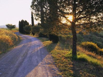 https://imgc.allpostersimages.com/img/posters/country-lane-at-sunrise-with-sun-shining-through-trees-near-pienza-tuscany-italy-europe_u-L-P7NK9S0.jpg?p=0