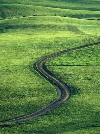 https://imgc.allpostersimages.com/img/posters/country-lane-winding-through-meadow-in-the-allgaeu-alps_u-L-PZKO8W0.jpg?p=0
