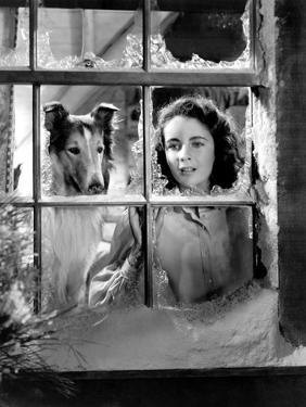 Courage of Lassie, Elizabeth Taylor, 1946