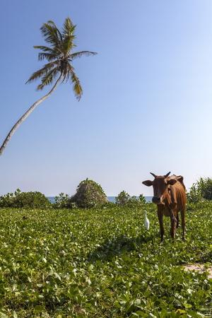 https://imgc.allpostersimages.com/img/posters/cow-and-crane-who-share-a-simbiotic-relationship-talpe-sri-lanka-asia_u-L-PQ8MYB0.jpg?artPerspective=n