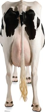 Cow's Rear Lifesize Standup