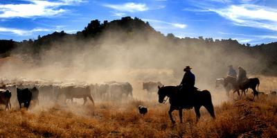 Cowboys driving cattle, Moab, Utah, USA