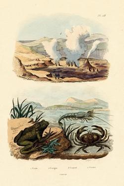 Crab, 1833-39