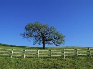 Tree and Fence in Pasture by Craig Aurness