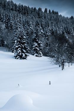 Alpine Flurry by Craig Howarth