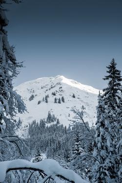 Alpine Trails by Craig Howarth
