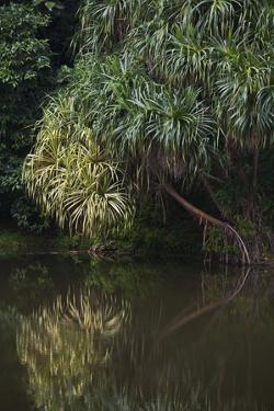 Borneo_D284 by Craig Lovell