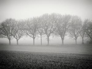 Foggy Landscape by Craig Roberts
