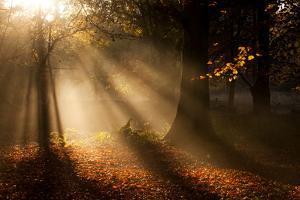 Morning Glory by Craig Roberts