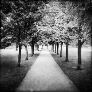 Row of Trees in a Park by Craig Roberts