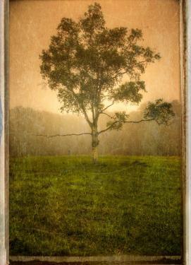 Aloneloop by Craig Satterlee