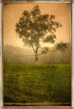 Tree Alone by Craig Satterlee