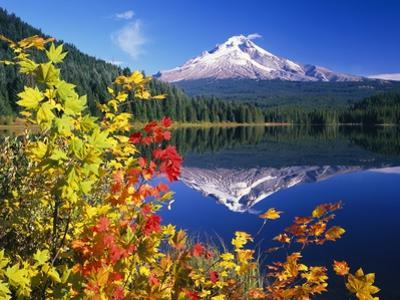 Autumn Leaves Growing Near Mount Hood and Trillium Lake by Craig Tuttle