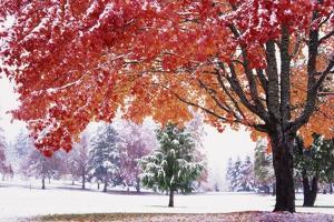Autumn Snow by Craig Tuttle