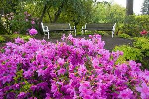 Benches Set Amid Rhododendrons by Craig Tuttle
