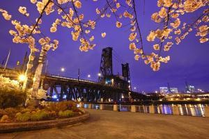Cherry Blossoms and Water Front Park, Steel Ridge, Willamette River, Portland Oregon. by Craig Tuttle