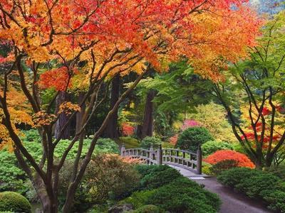 Fall colors at Portland Japanese Gardens, Portland Oregon