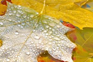 Fall Leaves Covered in Water Droplets by Craig Tuttle