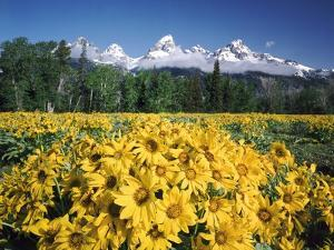 Grand Teton - Wyoming by Craig Tuttle