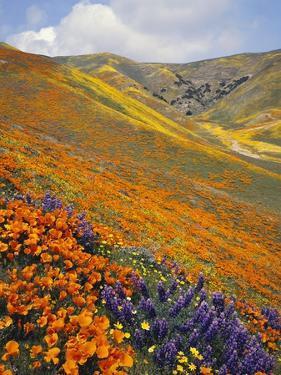 Hillside Wildflowers in Bloom by Craig Tuttle