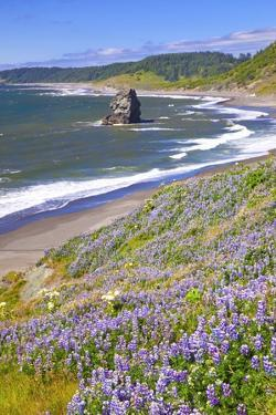 Lupine Wildflowers and Rock Formations at Cape Blanco, South Oregon Coast by Craig Tuttle