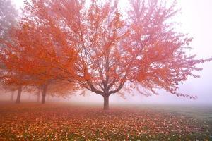 Misty Autumn Trees by Craig Tuttle