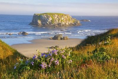Morning Light Adds Beauty to Wildflowers and Fog Covered Rock Formations at Bandon State Park by Craig Tuttle