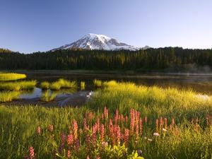 Mount Rainier National Park by Craig Tuttle