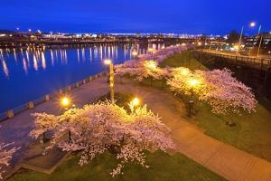 Night Image of Cherry Blossoms and Water Front Park, Willamette River, Portland Oregon. by Craig Tuttle