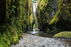 Oneonta Creek in Oneonta Gorge, Columbia River National Scenic Area, Oregon, United States by Craig Tuttle