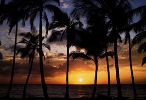 Relax: Palm Trees by Craig Tuttle