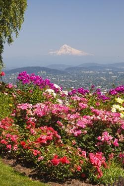 Rose Garden Adds Beauty to Mt.Hood from Pittock Mansion, Portland, Oregon, Pacific Northwest by Craig Tuttle