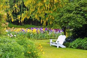 Schreiner Iris Gardens in Salem, Oregon by Craig Tuttle