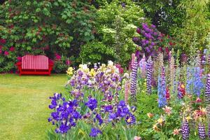 Schreiner Iris Gardens in Salem, Oregon by Craig Tuttle