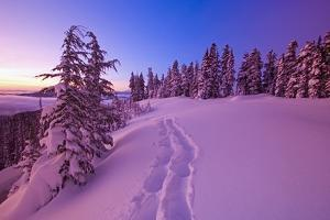 Snow-Covered Trees at Dawn by Craig Tuttle