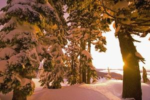 Snow-Covered Trees at Sunrise by Craig Tuttle