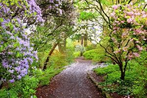 Spring Flowers in Crystal Springs Rhododendron Garden, Portland, Oregon, USA by Craig Tuttle