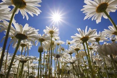 Sun Thru Flowers, Willamette Valley, Oregon by Craig Tuttle