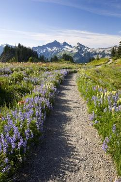 Trail Through Meadow of Wildflowers by Craig Tuttle