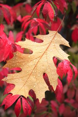 Water Droplets on a Fall Leaf by Craig Tuttle