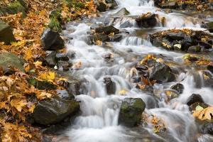 Water Running over Rocks in Wahkeena Creek by Craig Tuttle