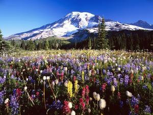 Wildflower Meadow and Mount Rainier by Craig Tuttle