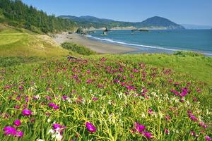 Wildflowers at Port Orford, Looking South Down Oregon Coast. by Craig Tuttle
