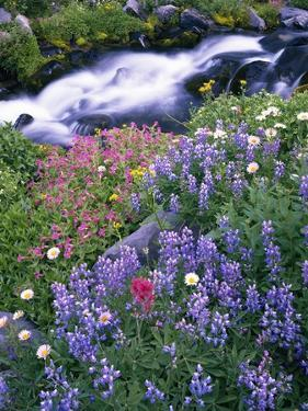 Wildflowers Blooming Along Rushing Creek by Craig Tuttle
