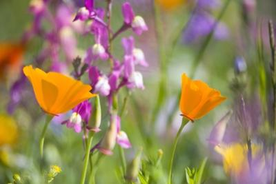 Wildflowers by Craig Tuttle