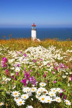 Wildflwers at North Head Lighthouse, Washington State, Pacific Ocean, Pacific Northwest by Craig Tuttle