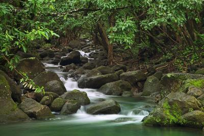 https://imgc.allpostersimages.com/img/posters/creek-flowing-from-a-rainforest-kauai-hawaii-usa_u-L-PN6PHY0.jpg?p=0